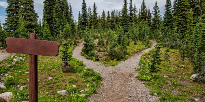 Photo of pathway surrounded by fir trees.